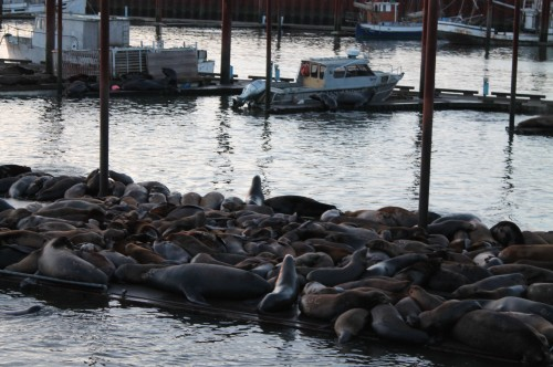Astoria-SeaLions-2